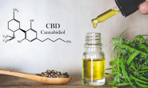 How is Cannabidiol Different From Marijuana?